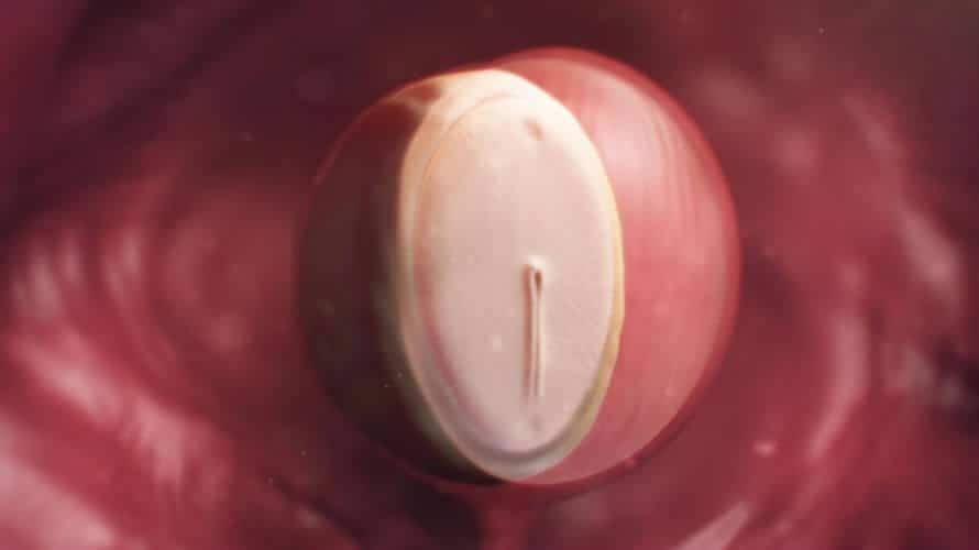 4. tjedan trudnoće