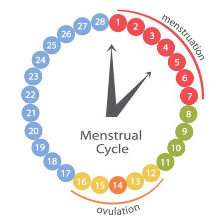 Bazalna temperatura - povišena tjelesna temperatura kao znak trudnoće