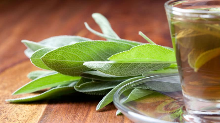 Čaj od kadulje (žalfije) – ljekovitost, priprema, nuspojave i cijena
