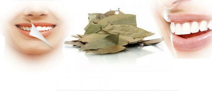 Sirup od lovora - lijek za kašalj