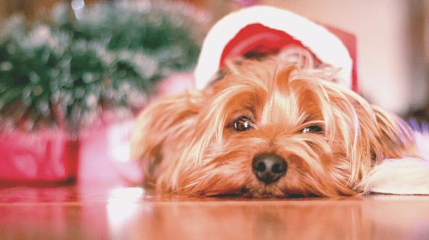 Idealni božićni pokloni za kućne ljubimce